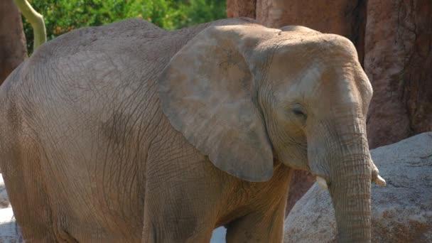 Skupina z pouštní sloni na horký letní den, ultra hd 4k, reálném čase