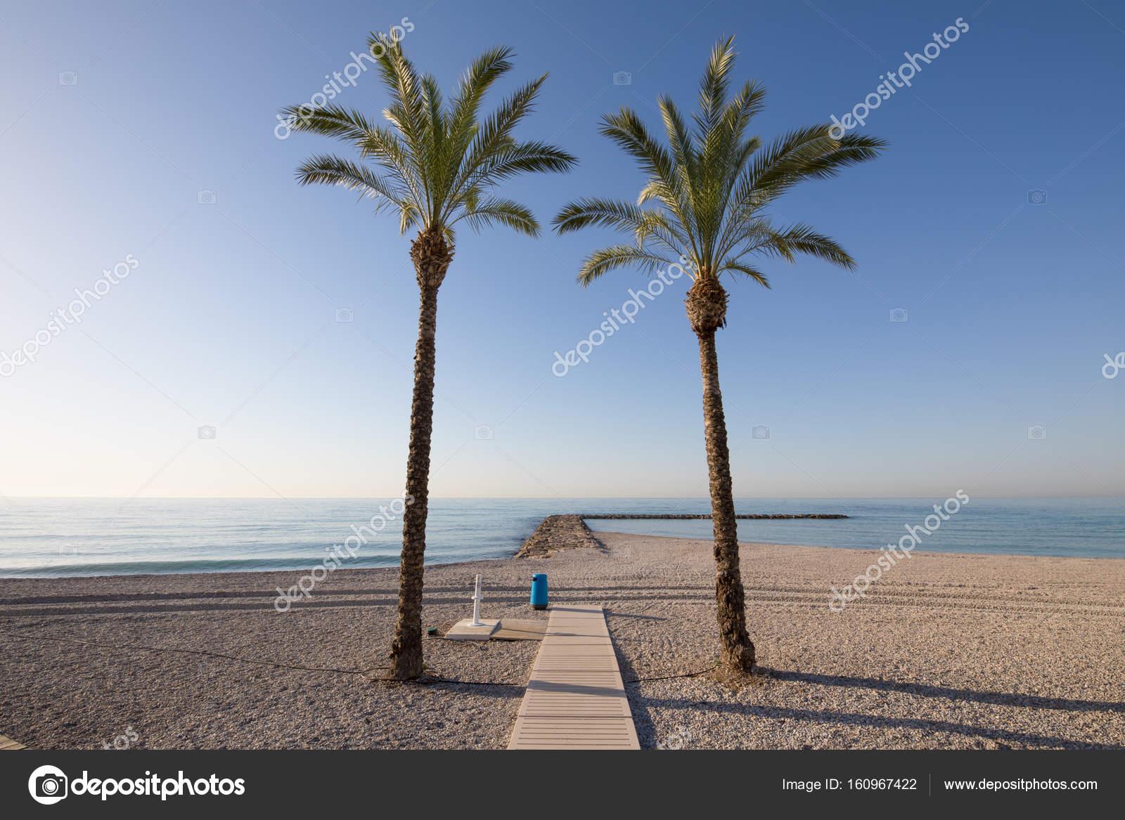 dos palmeras en océano de encuadre de playa — Fotos de Stock ...