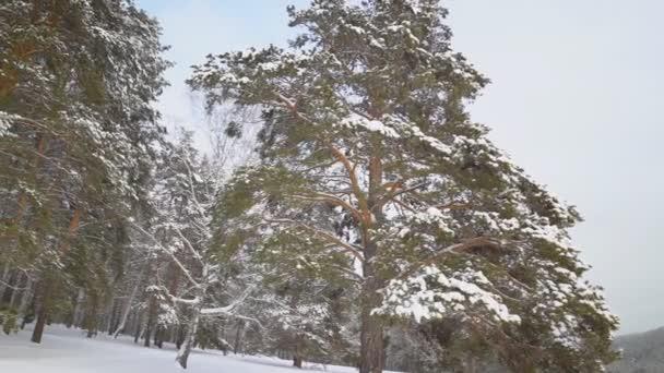 Gyönyörű havas téli természet
