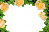 frame with delicate yellow roses on a white background.