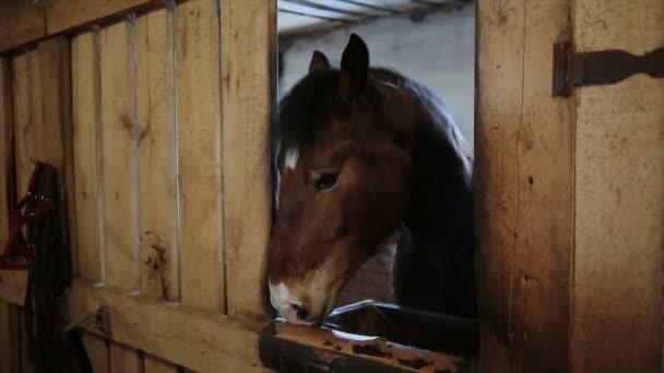 Kůň stojící ve stájích