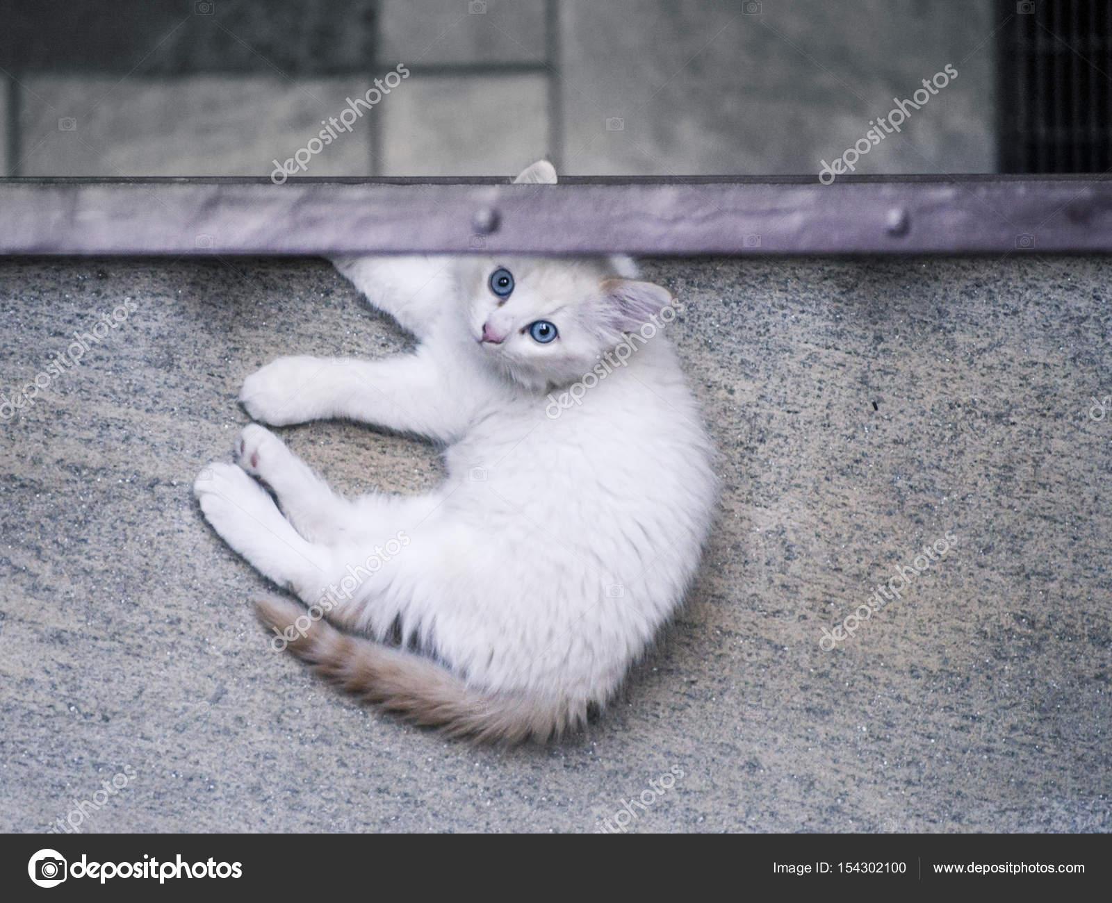 Gatto Cucciolo Dagli Occhi Blu Al Primo Piano Di Un Cortile Privato
