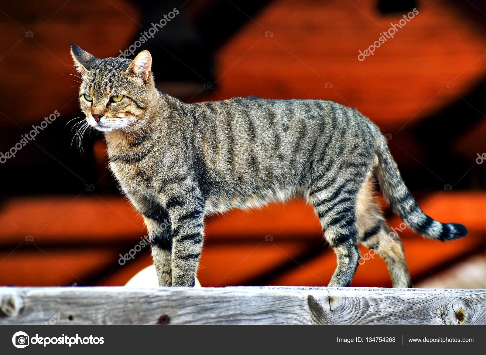583a6a032b5c Το κυνήγι της γάτας — Φωτογραφία Αρχείου © ncwrs  134754268