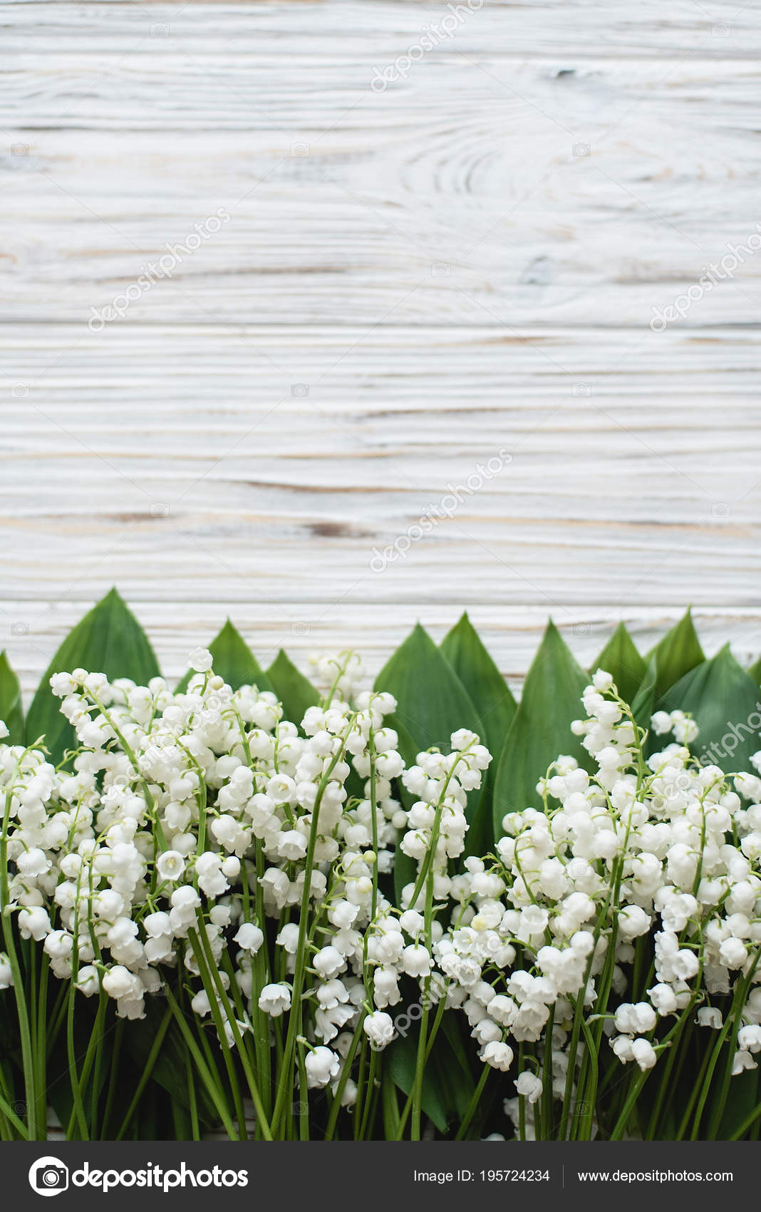 Lily Of The Valley Background Like Wallpapers