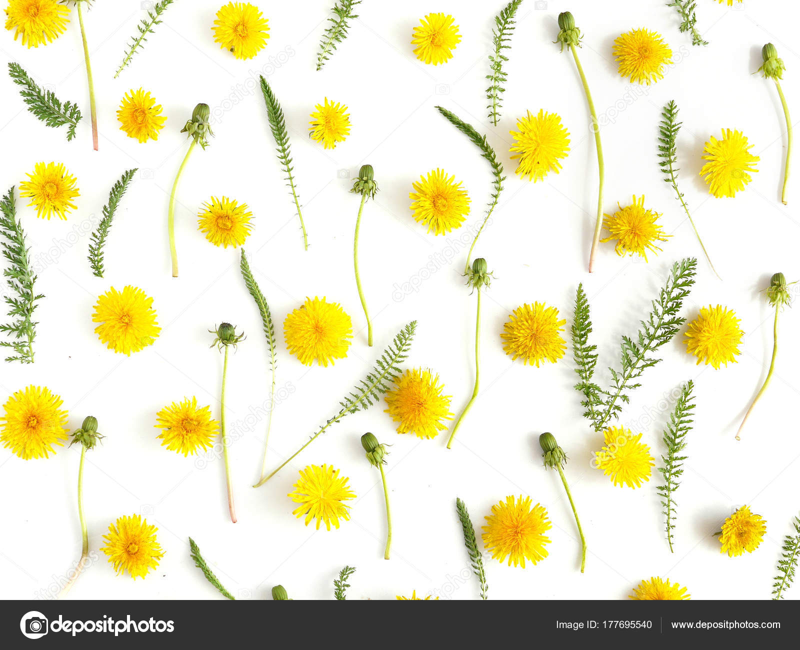 Botanical Composition Yellow Flowers Green Leaves Isolated White