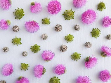 Floral composition with burdock flowers on grey background