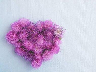 Heart from burdock flowers on light grey background