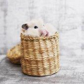 Little hamster hiding in rattan basket