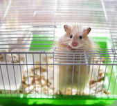 Photo Little hamster looking out of cage