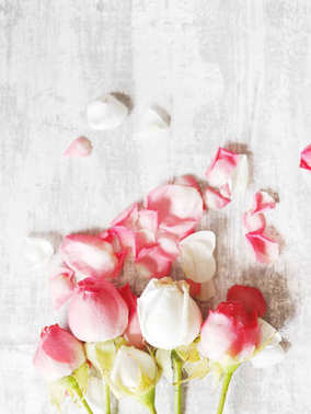 Pink roses and petals on textured grey background, top view with copy space