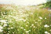 květiny na hřišti v létě na slunečný den