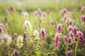 Fotografie Kytice na mýtině. Přírodní květinová pozadí, jaro, léto