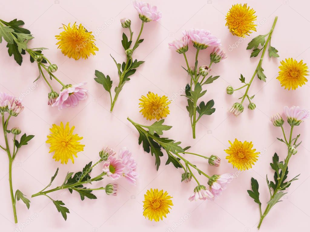 photo of Beautiful blossoms of pink Gerbera Daisies flowers texture pattern on pink background