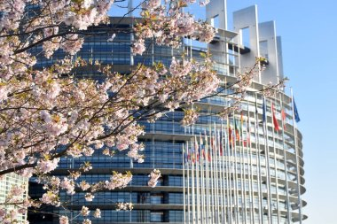 Peach trees bloomed around the European Parliament in Strasbourg - France 03