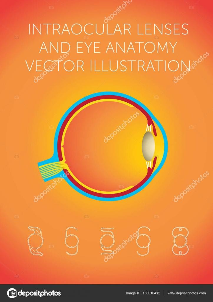 Intraokularlinsen und Auge-Anatomie-Vektor-illustration ...