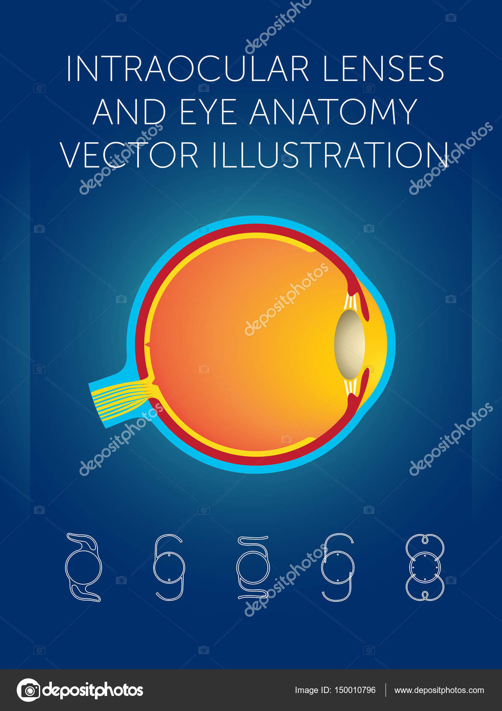 lentes intraoculares y anatomía del ojo vector ilustración — Vector ...