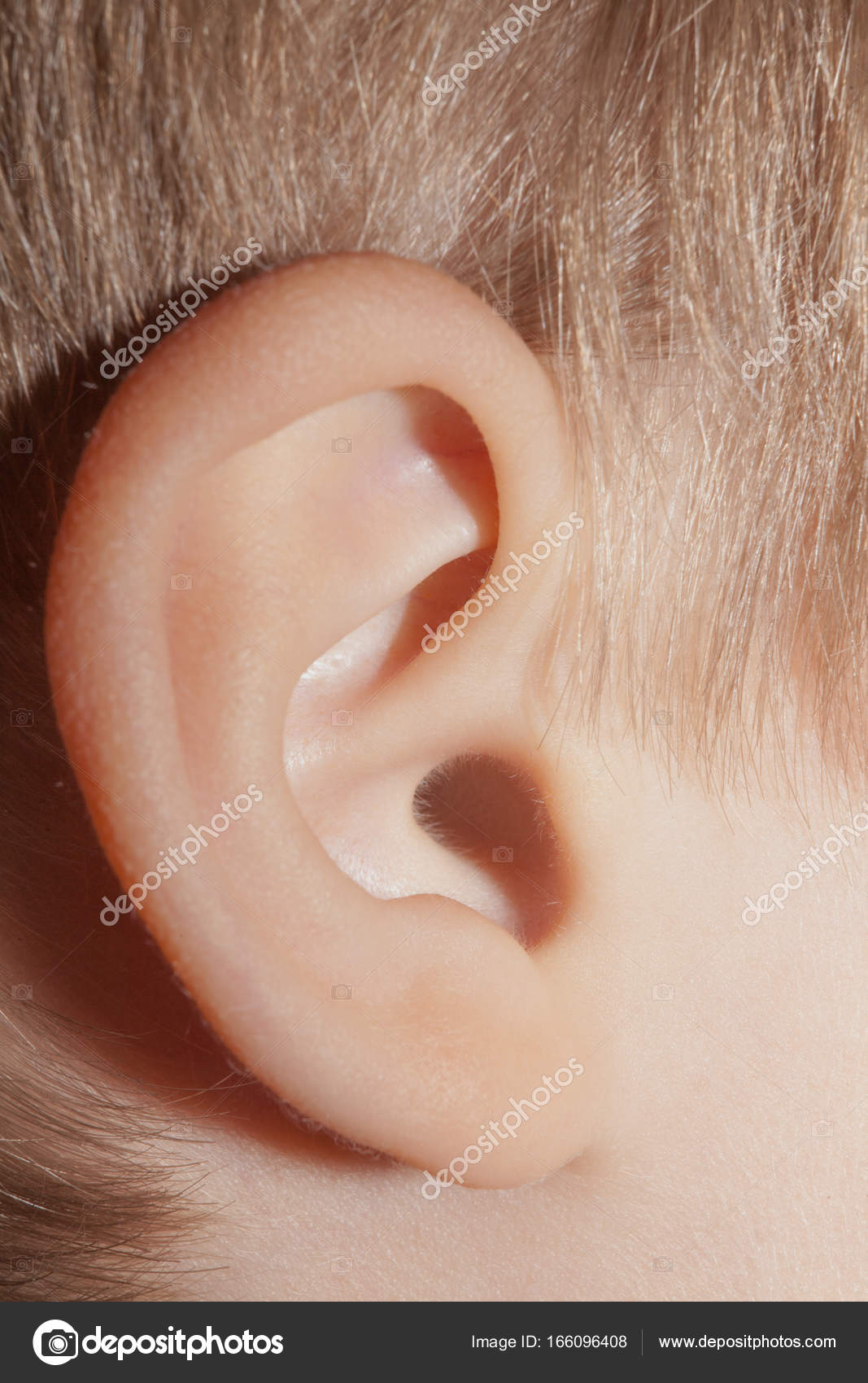 Menschliche Ohr, Körperteile, Anatomie, Nahaufnahme — Stockfoto ...