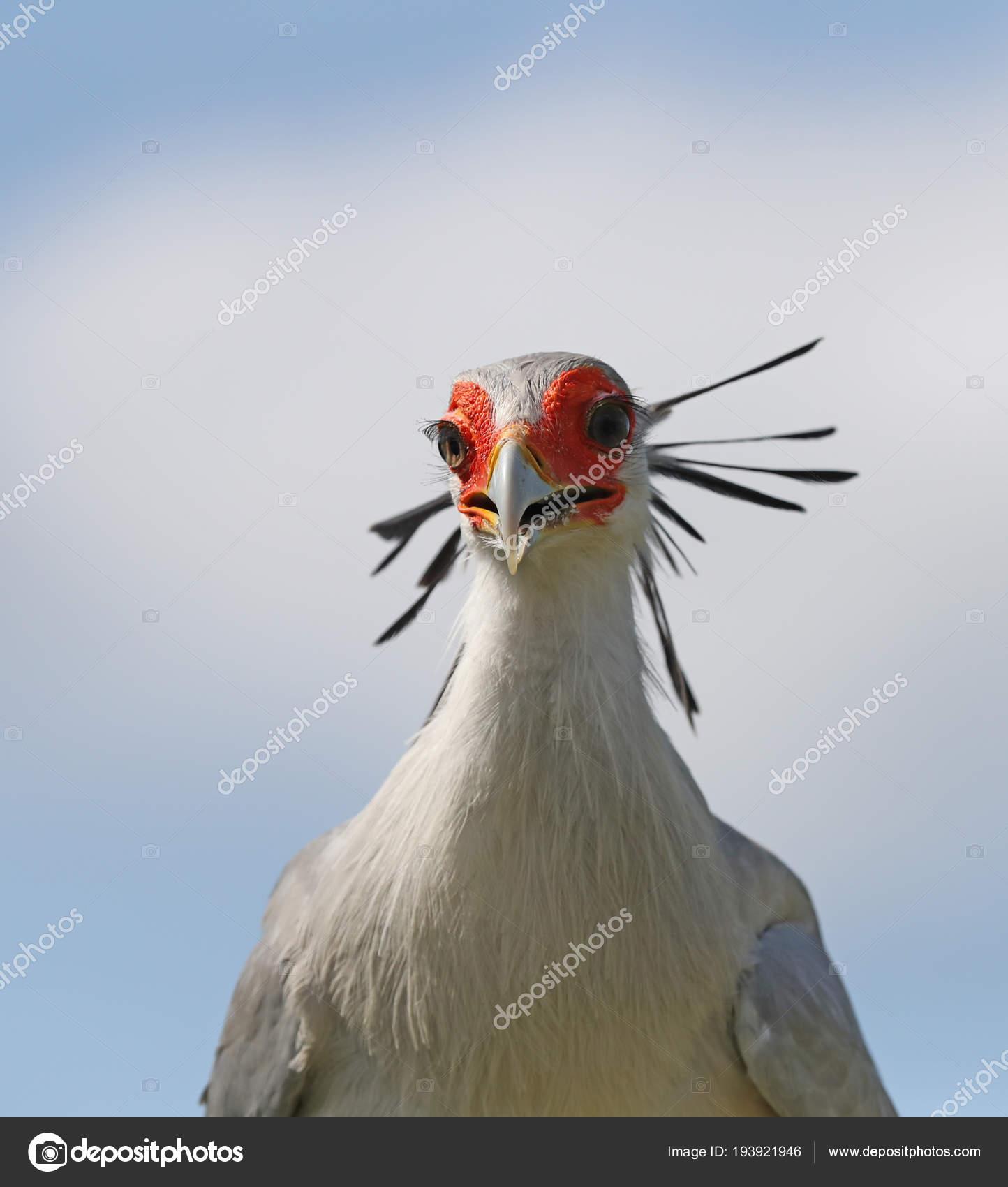 κοντινό επάνω μεγάλο πουλί φωτογραφίες