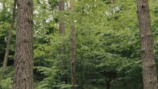 lesní stromy. létající koryto lesa. strom lesy. silueta stromy. sluneční erupce západ slunce. přírodní pozadí