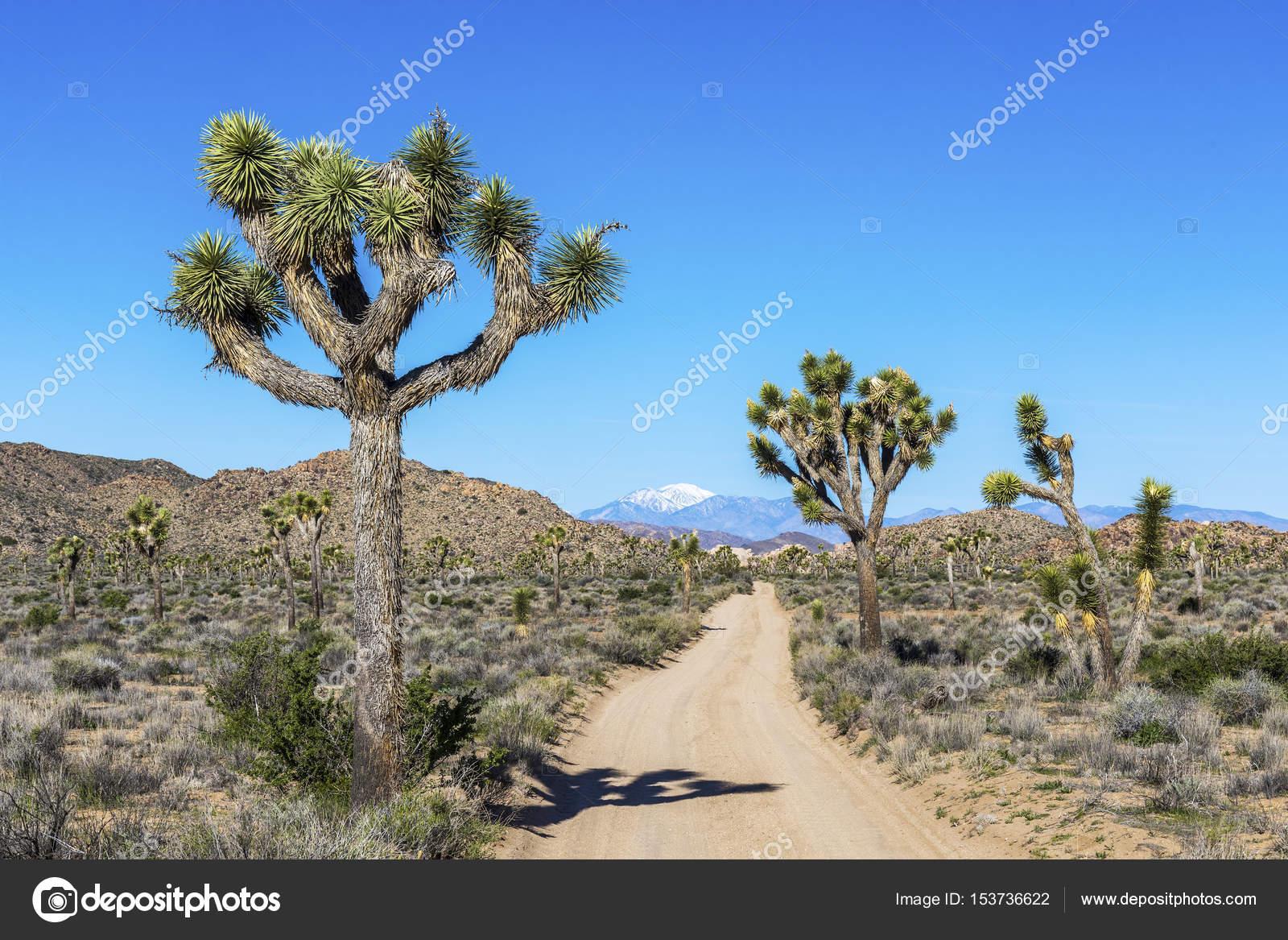 Dirt Road In Joshua Tree National Park California Stock