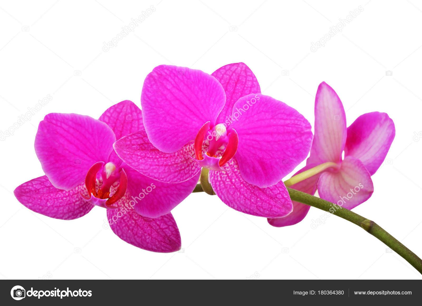 Fleur D Orchidee Rose Photographie Unkas C 180364380