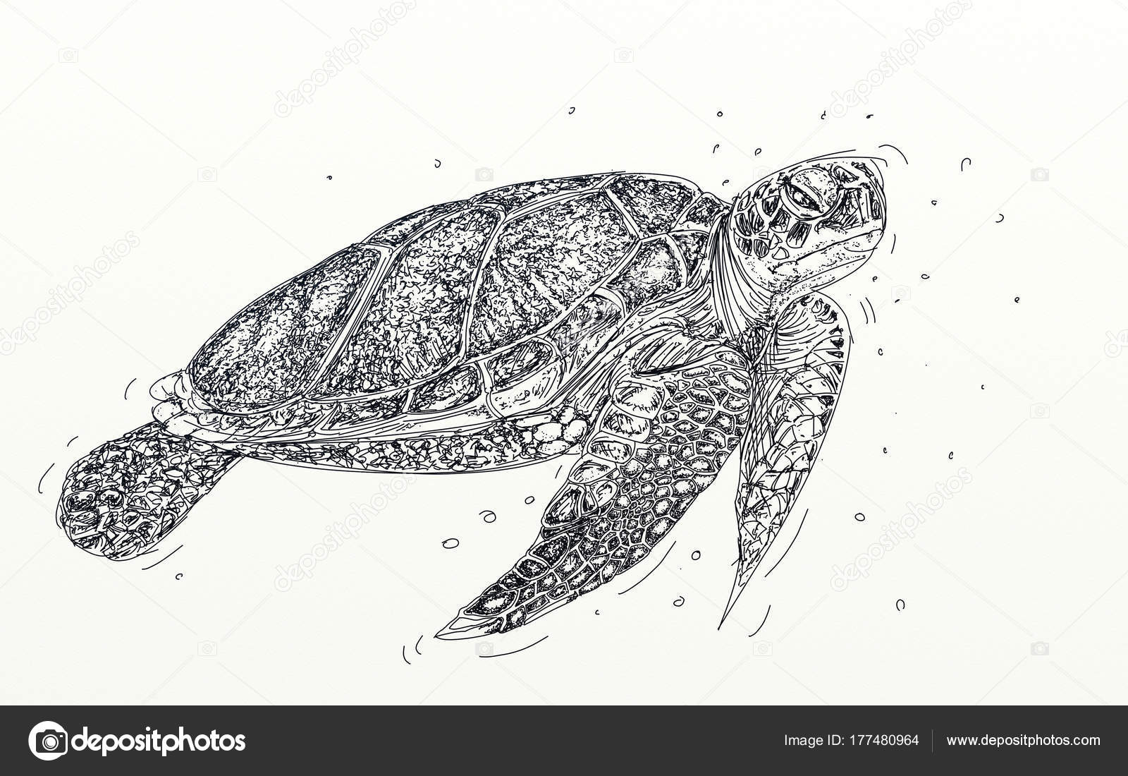 Une Tortue Mer Tortue Realiste Photographie Silviagaudenzi