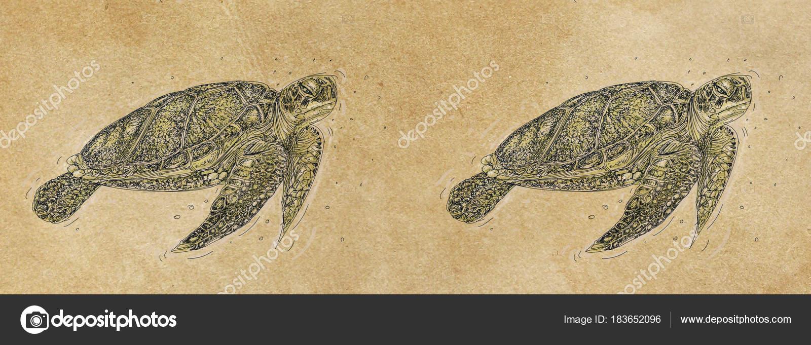 Banners Templates Design Sea Turtle Swimming Vintage Stock Photo