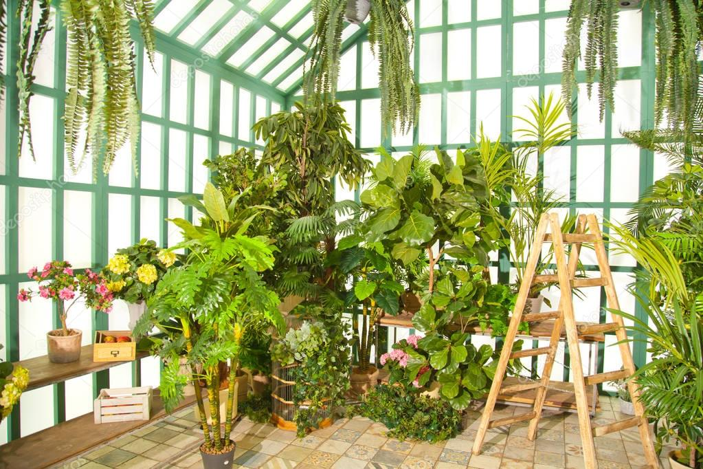 green greenhouse with wooden staircase inside with nobody