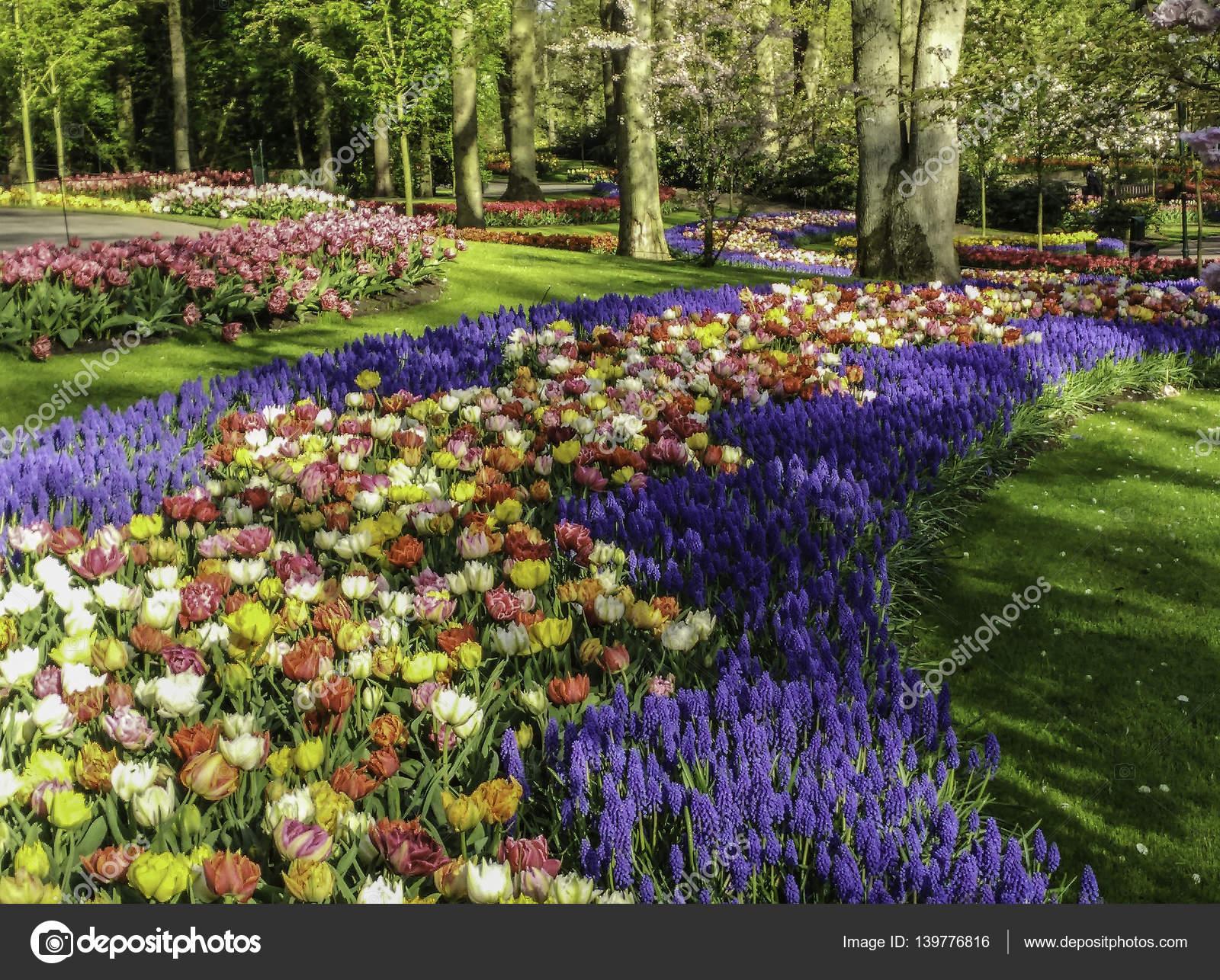 Keukenhof bloementuin stockfoto tanicofoto 139776816 for Www bloem en tuin nl