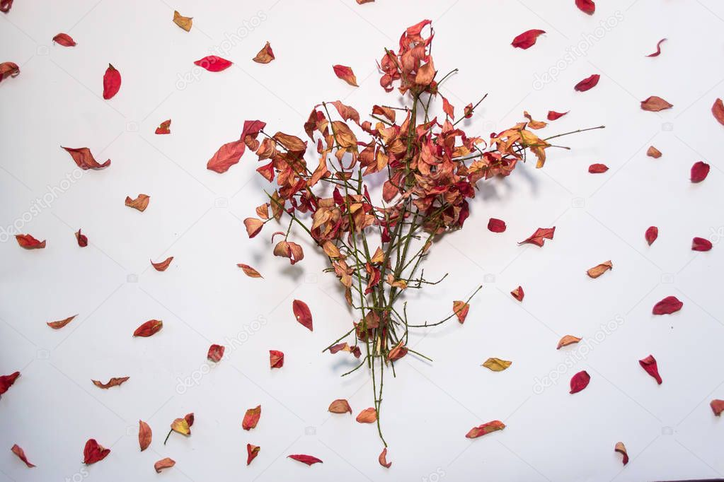 Autumn leaves against white background still life.