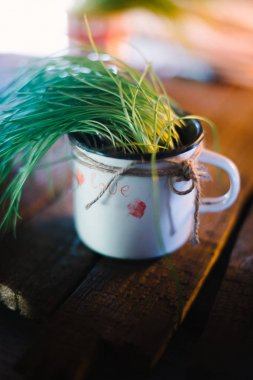 Mug with a plant on a wooden background