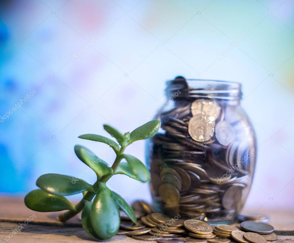 Money tree in a glass jar with coins on a blurred background of nature