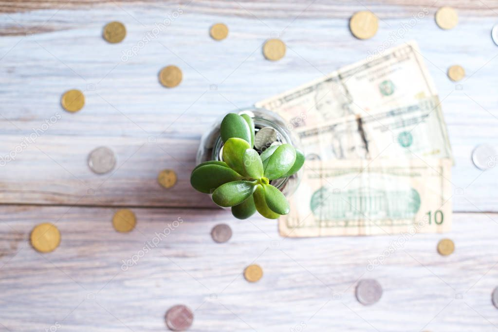 Money tree in a glass jar on a wooden background