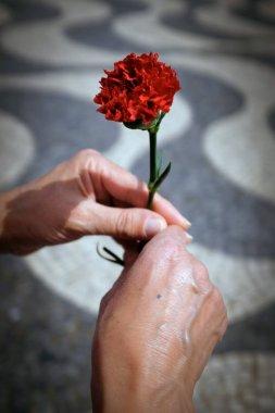 hands holding red carnation flower