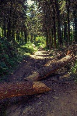 tree fallen across hiking trail
