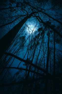 Silhouettes of distorted trees in full moon night
