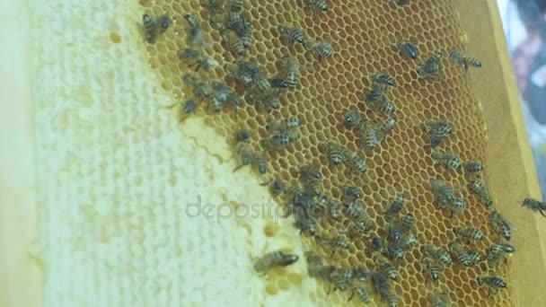 voštiny plné včel