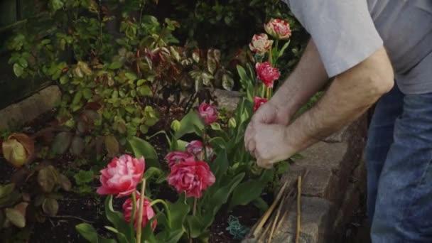 Springtime. Senior man is working in the garden. Watering flowers