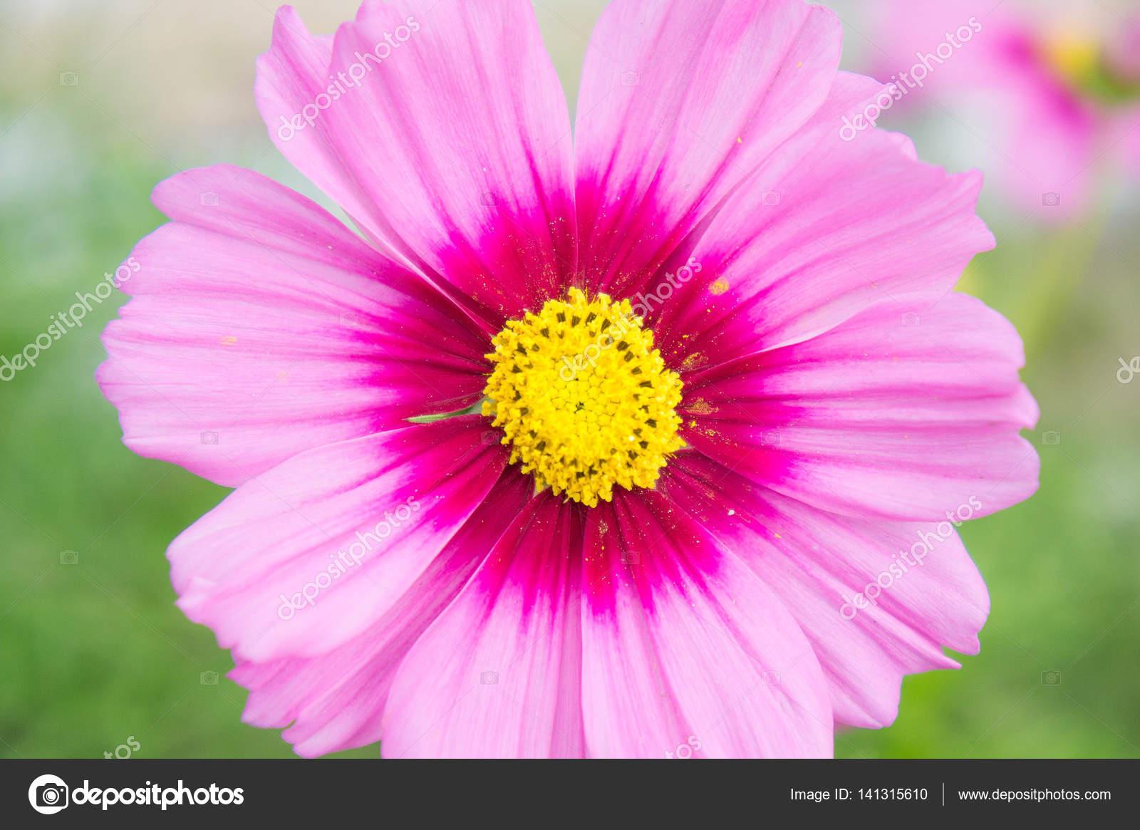 Baixar Imagens Bonitas: Flores No Parque, Close-up De Flores Bonitas E Hal
