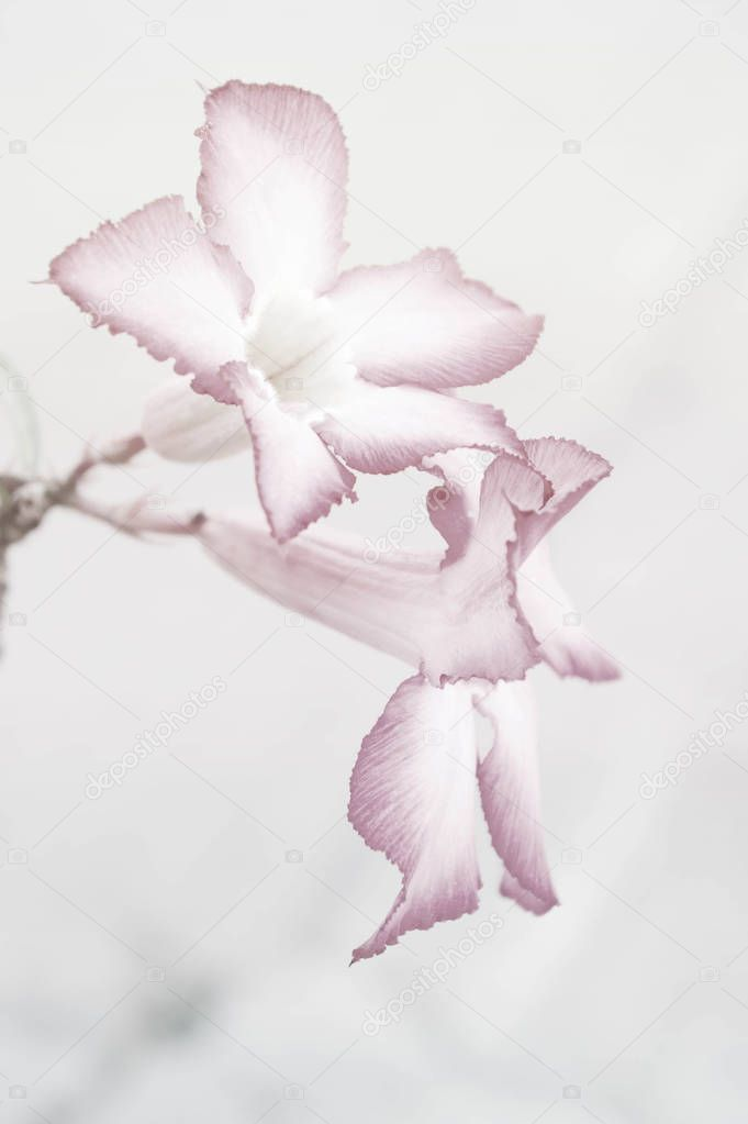 flower abstract style with soft background