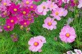 a kert, rózsaszín flowrs természet háttérben virág virágok