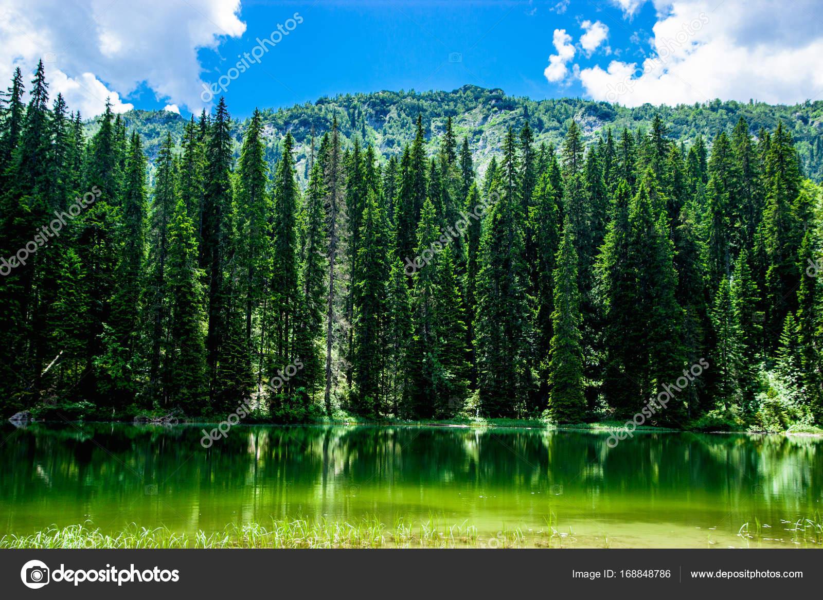 Bosque De Coníferas Y Laguna Negra