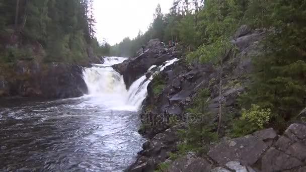 Rocky river v lese