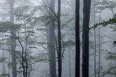 Misty spring forest with beautiful trees