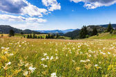 Obrovská hora trávník v květu