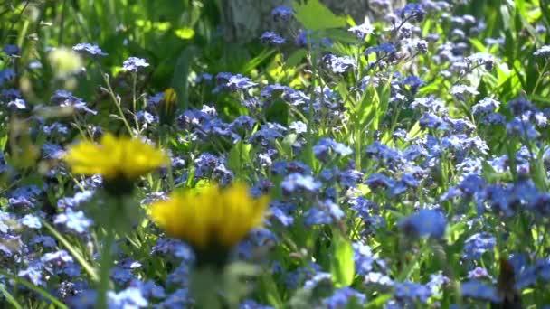 Pomalé Motion.glade pomněnkově modré květy