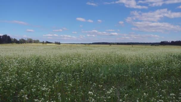 Krajina s poli a modrá obloha v letním dni