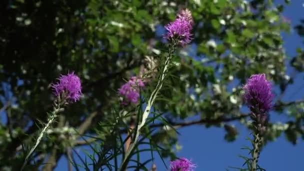 Fialové květiny a stromy proti obloze. Letní den. Nízký úhel