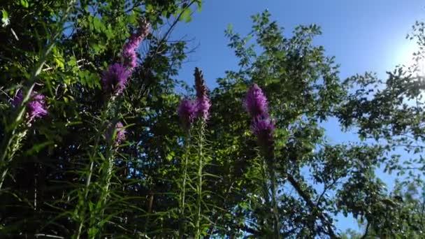 Flores Color Púrpura Hojas Árboles Tramo Hacia Sol Día Verano ...