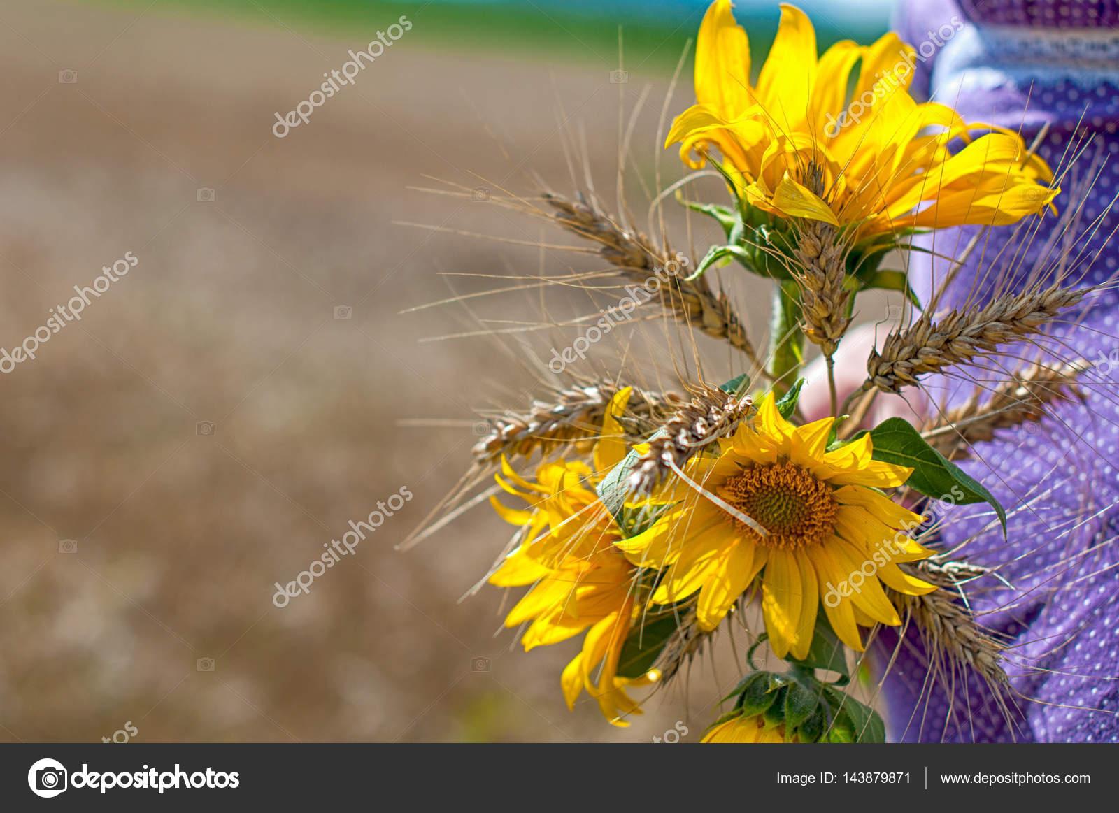 bouquet de tournesol (helianthus annuus) — photographie iosifbudau
